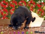 mimi le beauceron - Blog de angel09270