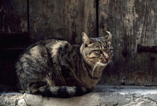 Un chat se rend tous les jours sur la tombe de son maître en Italie