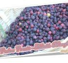 Falsa Fruit - Health Benefits, Nutrition, Calories & Vitamins