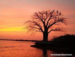 Iles du Saloum Découverte (Ndangane) : 2018 Ce qu'il faut savoir pour votre visite - TripAdvisor