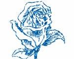 la rose et le plus beau signe d'amour qu'il peut existé au monde