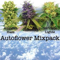 Autoflower Mixpack - ILGM