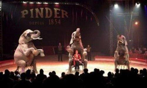 Pétition : Vive les cirques sans animaux à Chartres