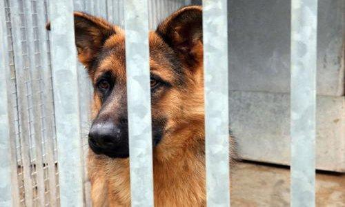 Pétition : Fin des contrats aidés = euthanasie