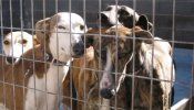Pétition : Stoppons la zoophilie en Allemagne