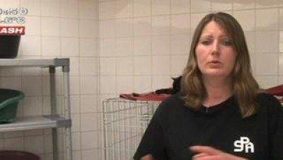Adoption : Opération Portes Ouvertes à la SPA de Tourcoing - Vidéo avec Dailymotion