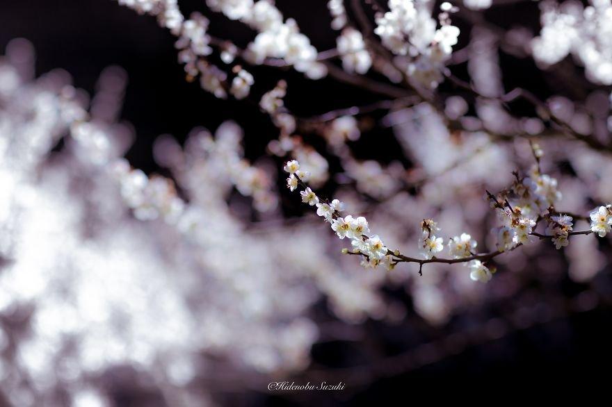Le  printemps au Japon ^_~