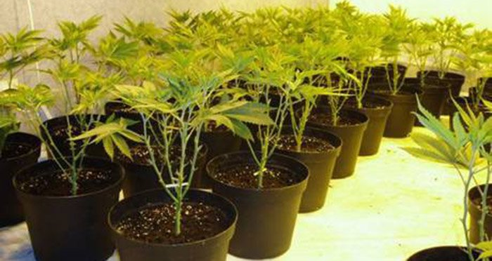 Homemade Cannabis: 5 places to grow your own pot indoors