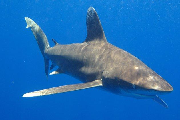 Une journée mémorable pour la protection des requins