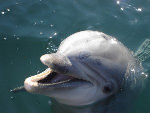 Demand Oil Company Pay For Dolphin Restoration