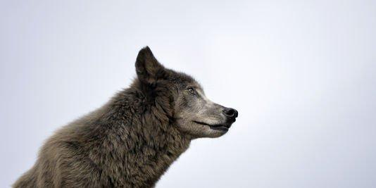Ségolène Royal crie au loup
