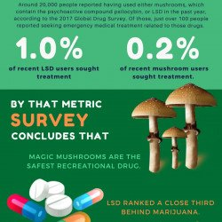 Magic Mushrooms & LSD Safest Drugs Finds Survey