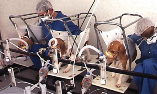 Pétition : Pour l'abandon du projet d'animalerie à des fins de recherche médicale et pour le développement des méthodes substitutives à l'expérimentation animale au pôle santé de Nancy Bra...