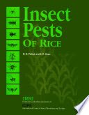 Insect Pests of Rice