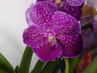 paradis des orchidées