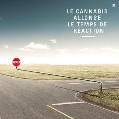 Le cannabis allonge le temps de réaction: nouvelle campagne de la SAAQ