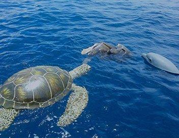 Le dauphin et la caméra-tortue