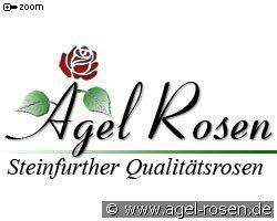 Rose 'Mireille Mathieu' kaufen » Historische Rosen » Gartenrosen (wurzelnackte Rosen) | Agel Rosen Onlineshop
