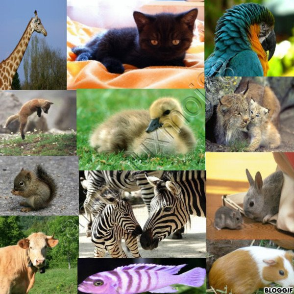 Blog de animauxmoi88