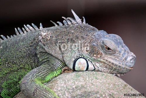 """""""Ferme des crocodiles de Pierrelatte : Amphibiens et sauriens (Drôme-France)"""" photo libre de droits sur la banque d'images Fotolia.com - Image 162481965"""