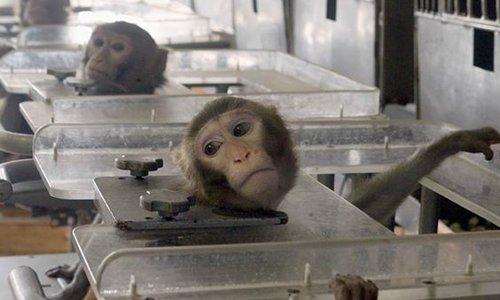 Pétition : Pour une meilleure protection des animaux de laboratoire