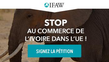 Pétition : Stop au commerce d'ivoire dans l'UE
