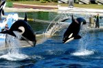 Marineland bassin orque - Blog de morgane-fxxck83