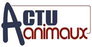 ACTU Animaux - Accueil - Sauver des animaux en quelques clics : chats , chiens , cheval , cheva ux , animaux sauvages , animaux domestiques , nouveaux animaux de compagnie