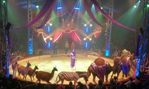 Pétition : Non au Cirque Bormann à Paris ou ailleurs - Non à l'exploitation des animaux sauvages - Rien de divertissant !