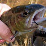 pêche de la truite au poissons nageurs part II | Pecheur.info