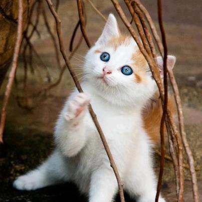 Je veux un minet ! Oui, oui j'ai bien dit un Minet !!! MDR