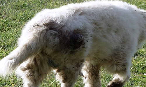 Pétition : STOP ! Il faut agir en faveur du retrait des animaux et de l'arrêt immédiat de l'activité de ce berger.