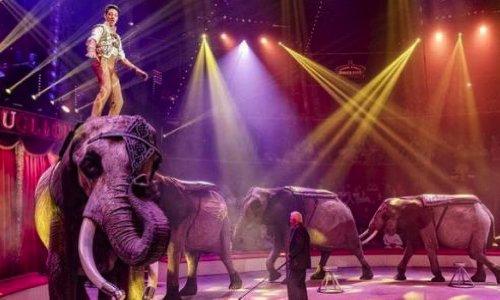 Pétition : Non aux cirques avec animaux à Valence d'Agen et partout ailleurs