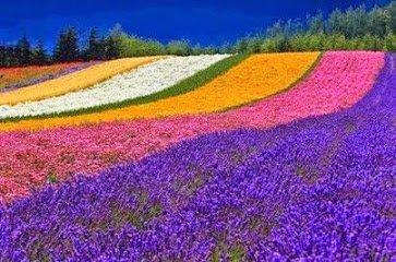 japan gardens....