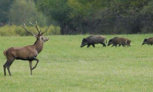 Pétition : Instaurer le dimanche comme jour sans chasse
