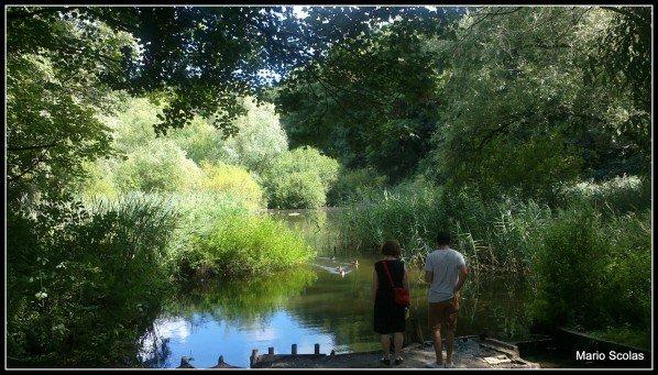 Une petite promenade verte en passant par le Moeraske
