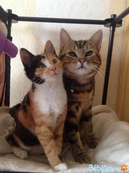 Votez pour la photo de valerie701 : mes 2 amours de chats