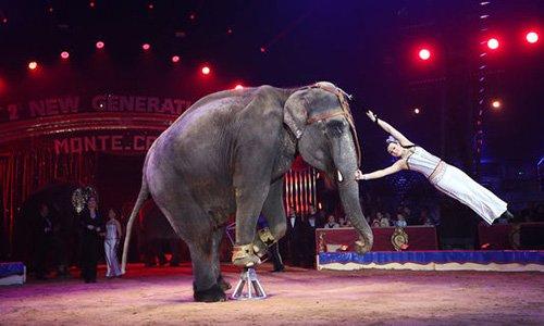 Pétition : Pour l'interdiction des cirques avec animaux sur la commune de Saint Maximin St Baume