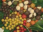 pche carpe chasse guerl laboratoire gauthier bouillette amorce tang fuite aromes