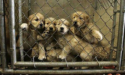 Pétition : Retirer les animaux de Truffaut où ils sont maltraités