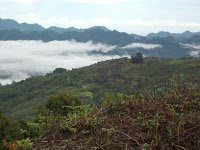 Komponen utama penyebab terjadinya kebakaran hutan | Pustaka Ilmu