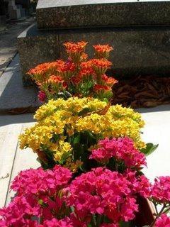 Top 3 des fleurs d'ete pour cimetieres - Paperblog