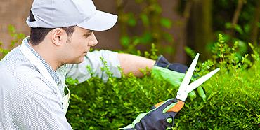 Cuidado Vegetal S.L. – Servicios de Jardineria