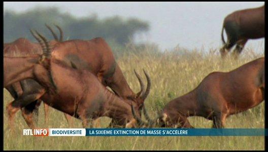 Selon une étude, 30% des espèces de vertébrés sont en déclin