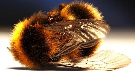 Ne laissez pas Bayer faire annuler l'interdiction des pesticides tueurs d'abeilles