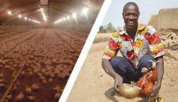 Pétition : Stop aux exportations des surplus alimentaires européens vers l'Afrique !