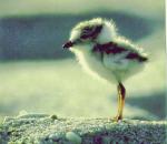 le blog de Gen0cide-Animal