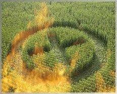 Les OGM sont une arme biologique pour le contrôle de la population. - rusty james news