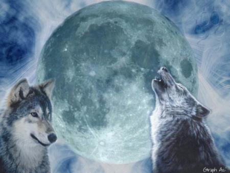 Un amour de loup...garou! Fiction