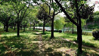 ヌートリア --- 日本ヌートリア交流協会公式ブログ ---: 恒例、大阪城ヌートリア観察会でヌートリアではなくテンを観察した件